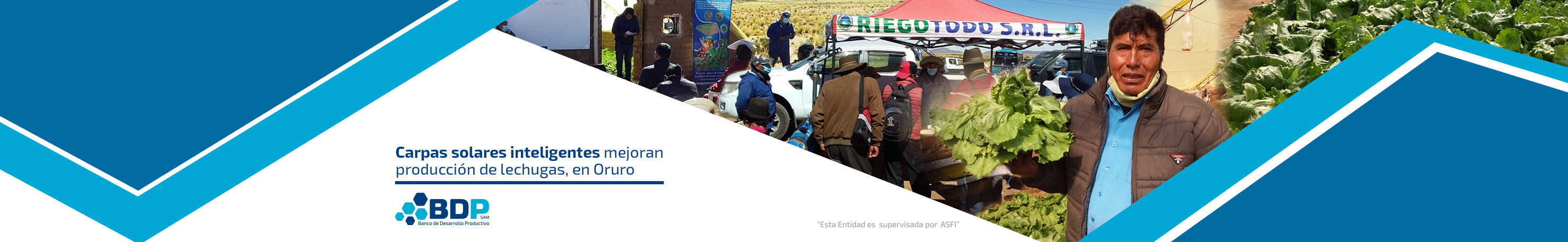 Banner Productores lechuga